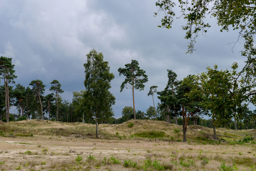 Tafelberg hiking route in Hulshorst the Netherlands Hulshorst Netherlands The Netherlands Beauty In Nature Day Forest Hiking Trail Holland Landscape Nature No People Outdoors Rain Clouds Scenics Sky Tafelberg Tree