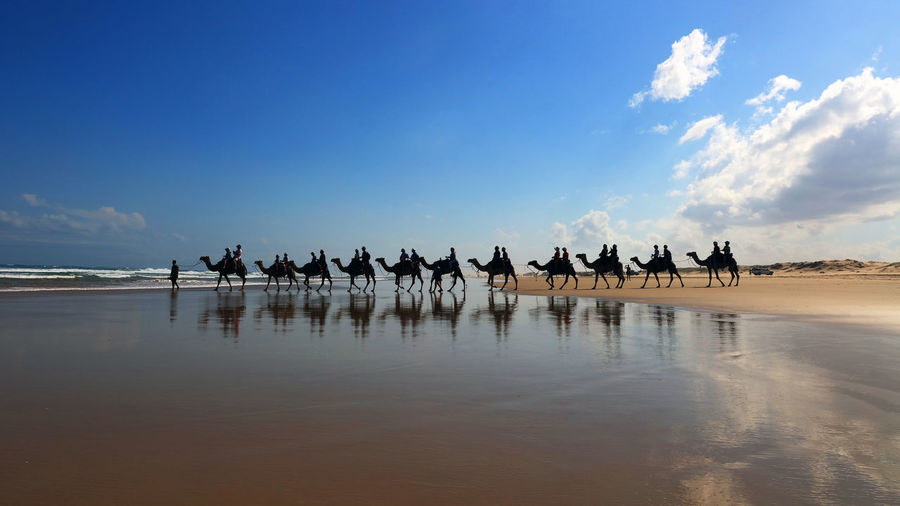 Camel caravan on the beach