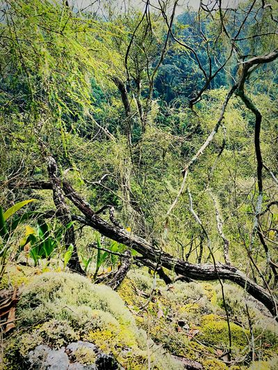Forest Photography Day Day Beauty In Nature Green Color Scenics - Nature Environment Sunlight EyeEmNewHere