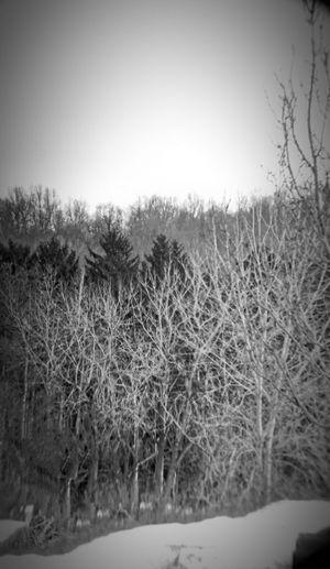 HDR Black And White Winter Wonderland Telephoto