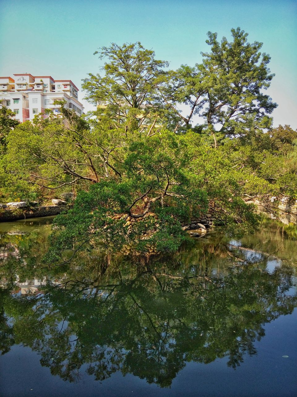 tree, reflection, architecture, built structure, building exterior, water, day, no people, waterfront, outdoors, nature, lake, growth, sky, clear sky, beauty in nature, animal themes