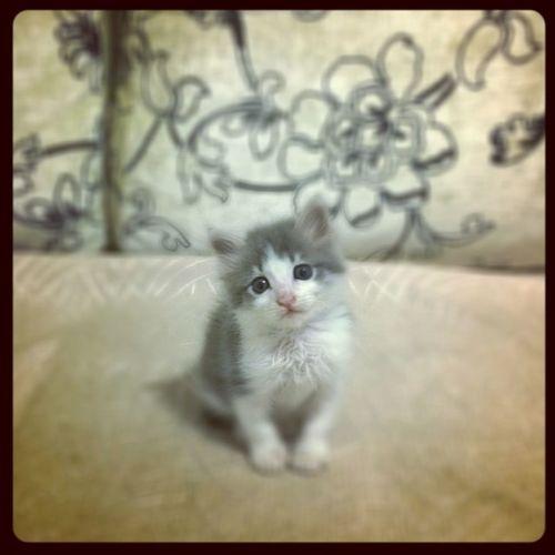 İsmi bile yok ama almasak ölecekti. Şimdi 🏠 arıyor. Sahiplenecek biri var mı? Kedi Istantlove Sahiplenme