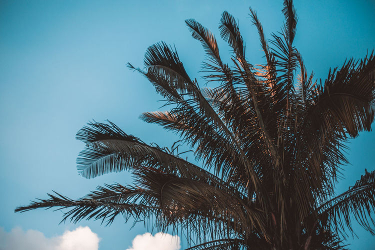 Low angle view of palm tree against blue sky