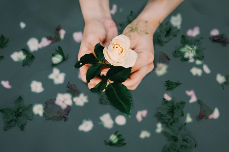 Hand Human Hand Holding One Person Human Body Part Flower Freshness Plant Indoors  Real People High Angle View Flowering Plant Nature Adult Women Lifestyles Leaf Food And Drink Body Part Flower Head