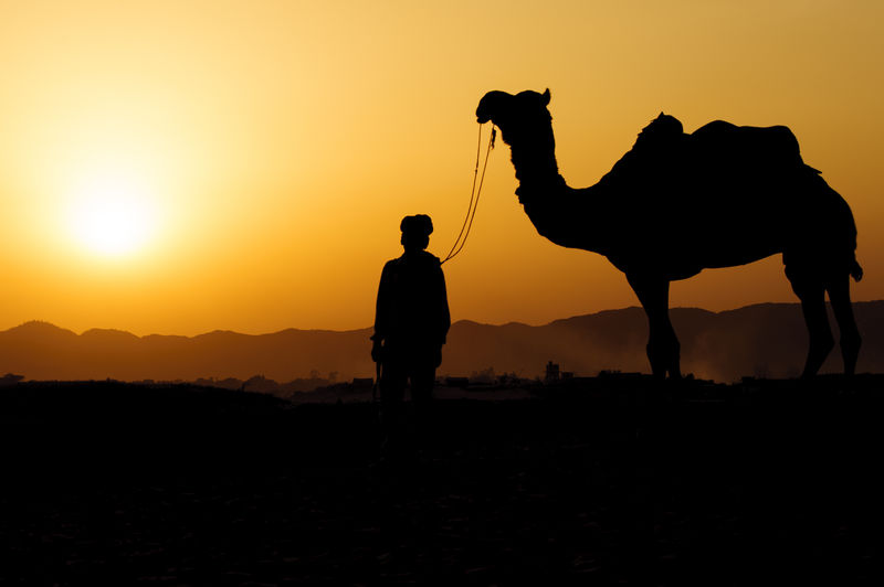 Silhouette Of Man And Camel Standing In The Desert At Sunset