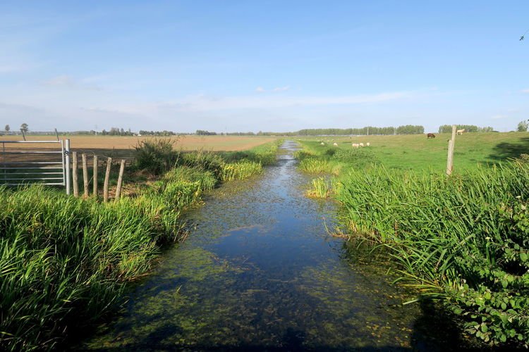 Dutch landscapes; water and sky Tranquil Scene Tranquility Plant Landscape Scenics - Nature Beauty In Nature Day Field Nature Sky Environment Grass Land Non-urban Scene Green Color Outdoors Dutch Landscape Ditch Grassland Stream Blue Sky Water_collection Canals And Waterways Canal Water