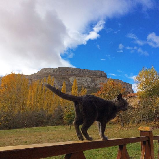 Cloud - Sky Sky One Animal Animal Themes Nature No People Day Outdoors Beauty In Nature Scenics Mammal Tree Domestic Animals Cat Cat Lovers Mountain Pets Autumn Colors Autumn