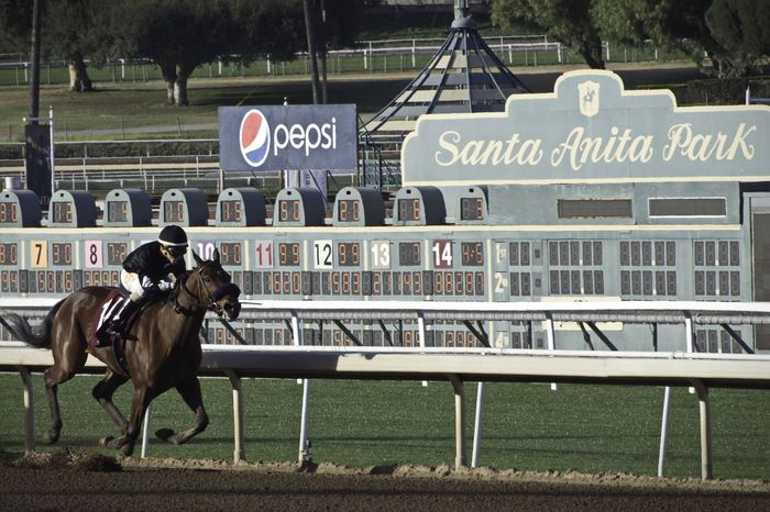 Santa Anita Horse Racing Race D5500 Horse Day Animal Themes