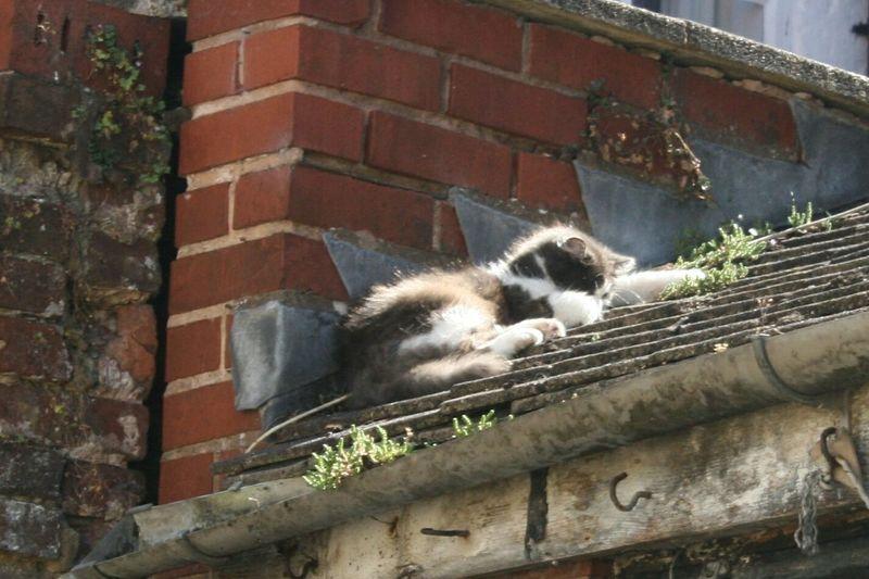 Cat Cat Sun Bathing Cat Sleeping Cat On The Roof