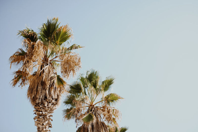 Palmtrees Nature Palm Palm Tree Palmen VSCO Contrast Day Growth Nature Nature_collection No People Outdoors Palm Tree Palm Trees Sky Sky Silhouette Sky_collection Tree