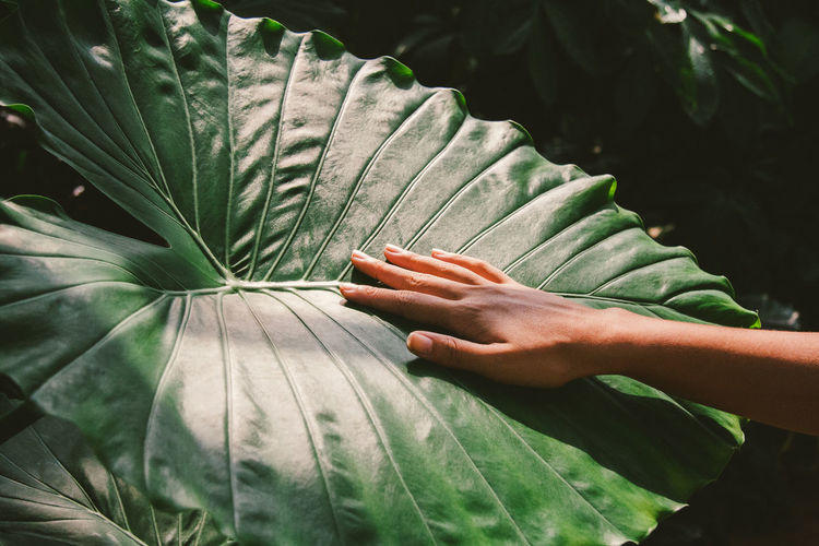 Leaf Plant Human Hand Human Body Part Plant Part Hand Green Color Real People Growth Close-up Day Nature Lifestyles One Person Body Part Unrecognizable Person Beauty In Nature Outdoors Focus On Foreground Finger Leaves