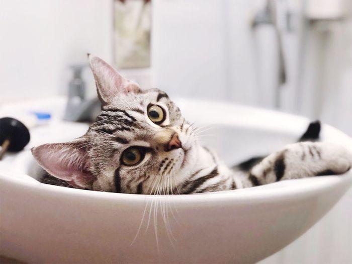 EyeEm Selects Pets Domestic Domestic Cat Cat Domestic Animals Mammal