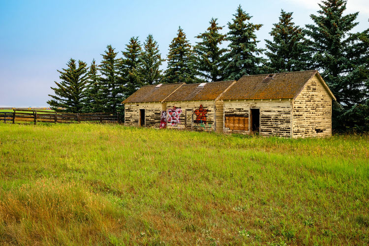 Outbuilding on the Prairie Abandoned Agricultural Building Architecture Building Building Exterior Built Structure Cottage Day Field Grass Green Color Growth House Land Landscape Nature No People Outdoors Plant Rural Scene Sky Tree