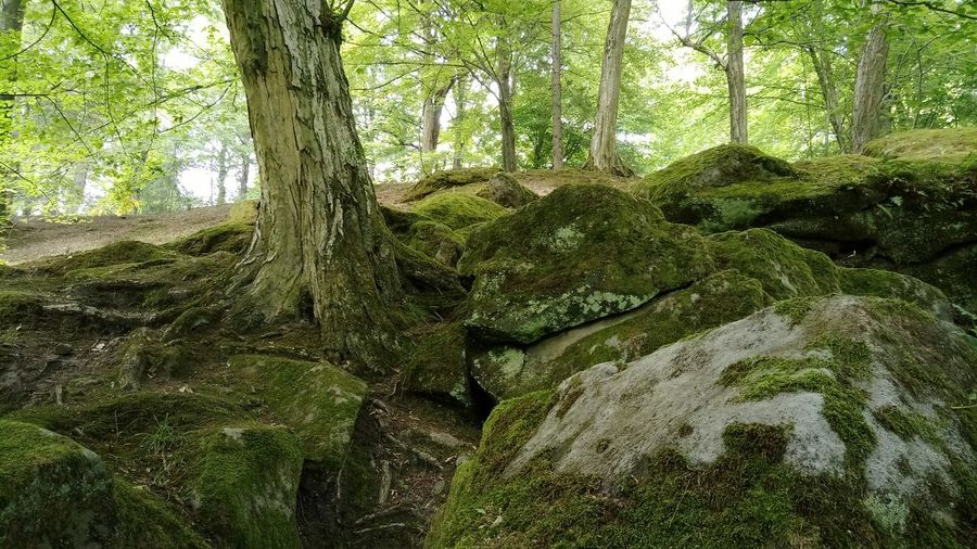 Tree Nature Green Color Growth Day No People Outdoors Forest Beauty In Nature Plants Stones Rocks Tranquility Low Angle View Trees And Nature Tree Trunk Moss-covered Mossy Rock