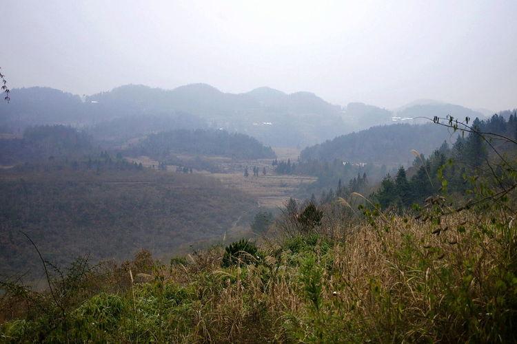乡村 野外 郊野 Fog No People Agriculture Nature Outdoors Tree Day Irrigation Equipment Sky