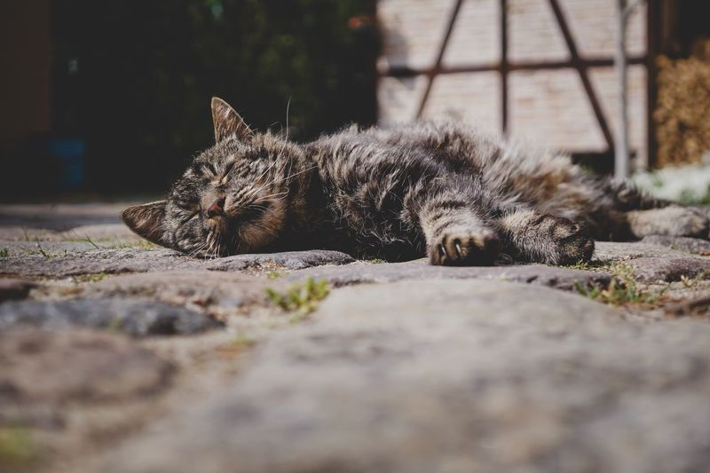 Close-up of a cat resting on footpath