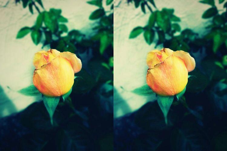 nature. ~ Flowers First Eyeem Photo