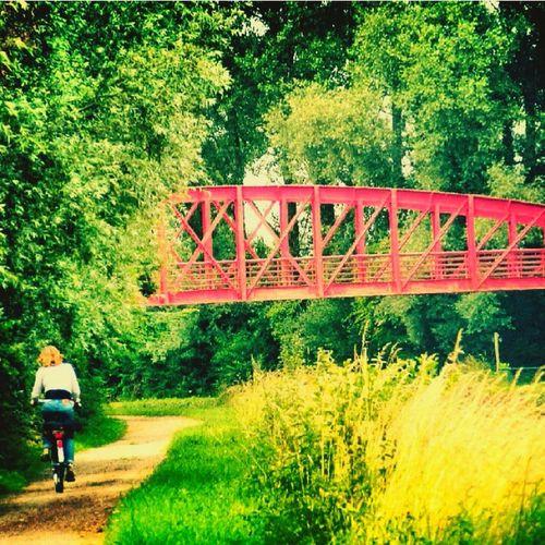 Village Life Green Red Bike Water