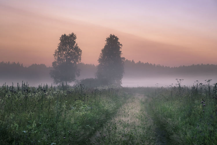 Scenic landscape at summer evening with sunset in southern Finland Atmospheric Mood Beauty In Nature Colorful Sky Evening Fog Foggy Grass Green Landscape Mist Misty Morning Nature No People Outdoors Path Peaceful Road Summer Nights Summertime Sunrise Sunset Tree Trees Vegetation