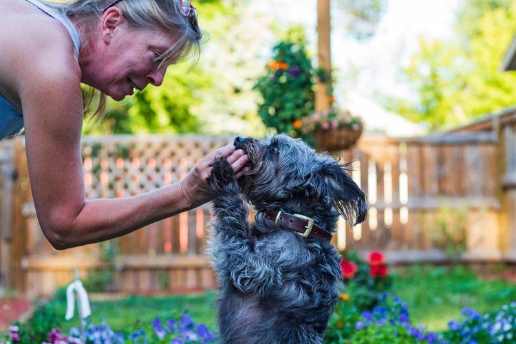 Woman touching dog at yard