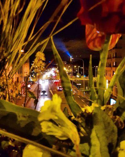 City Street Ville Courbevoie Fleurs