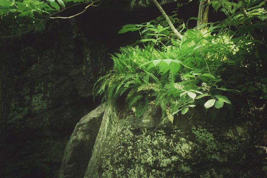 Plants Ferns Woods Nature Forest