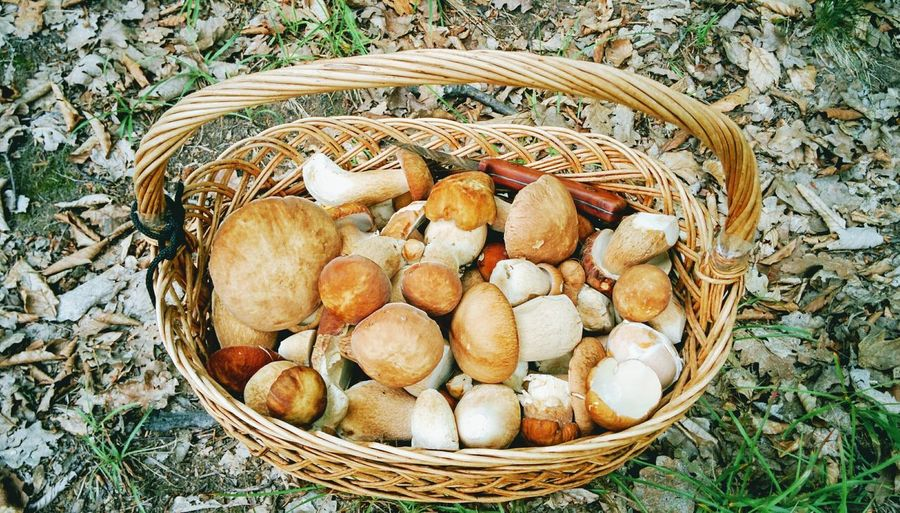 Forest Mushroom Boletus Basket High Angle View Variation Directly Above Beach Close-up Raw Fungus Woods Edible Mushroom Growing Moss WoodLand