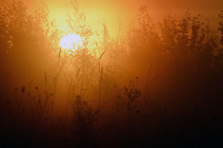 Fishing. Tomsk region, Siberia, Russia. Beauty In Nature Dark Landscape Morning Nature Non Urban Scene Outdoors Plant Russia Siberia Sky Sun Sunbeam Sunrise Sunset Tomsk Region Tranquil Scene Tranquility Colour Of Life EyeEm Selects