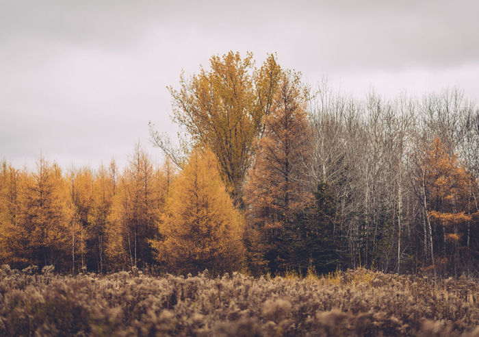 Autumn Autumn Colors Beauty In Nature Day Forest Grass Growth Nature No People Outdoors Sky Tree Yellow Leaves