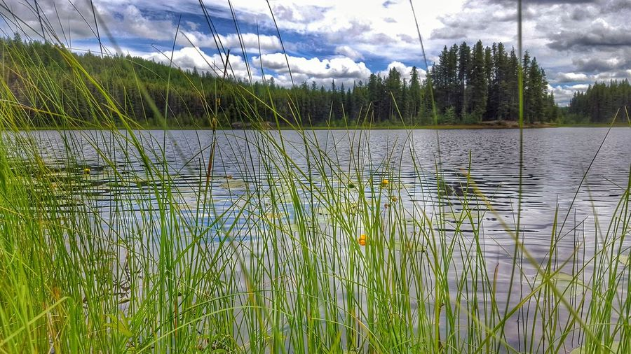 Green Cup Lake Secret Lake Old Memories Lake View EyeEm Best Shots - Nature EyeEm Nature Lover Natural Beauty Rich Colors First Eyeem Photo True Beauty Majestic Nature Eyeem Best Shots - Canada Nature Tranquility Landscape Landscapes Forest Creekside