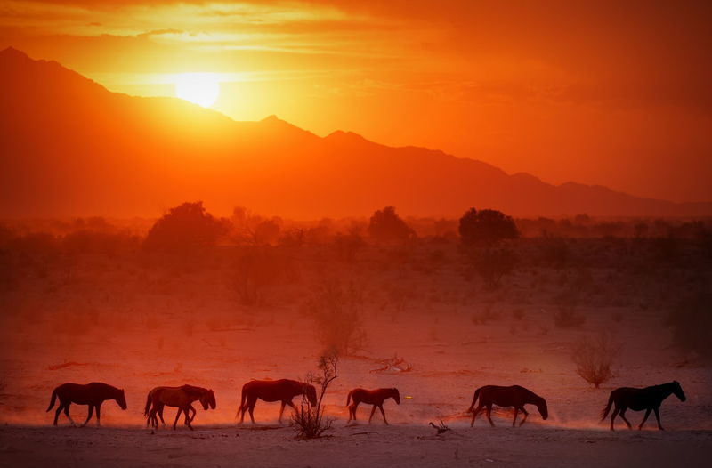 Horses on landscape against orange sky