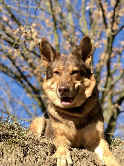 Portrait of a dog sitting on tree
