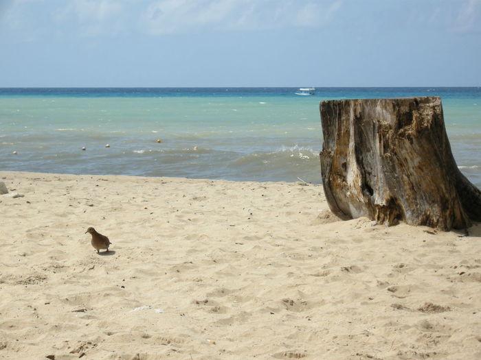 Barbados Beach Bird Coastline Escapism FootPrint Horizon Over Water Ocean Outdoors Sand Sea Seascape Shore Summer Surf Tropical Climate Vacations Water Wave Weekend Activities