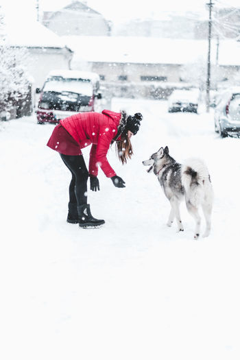 Husky Cold Temperature Snow Winter Canine Dog Pets Animal Themes One Animal White Color Domestic Animal Mammal Domestic Animals Field Full Length Real People Land Nature Covering Warm Clothing Snowing