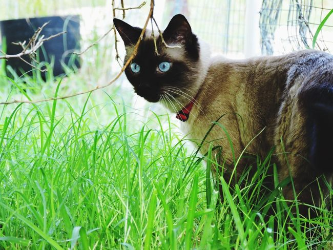 """""""Piercing"""" / Oliver, 3 years, and his first experience outside without a lead 