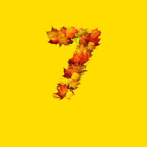 Close-up of autumnal leaves against yellow background