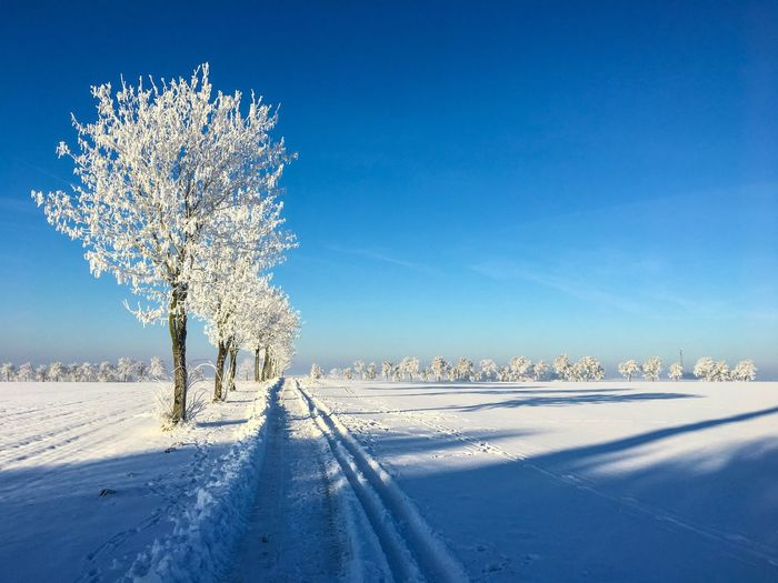 Cold Temperature Winter Tree Beauty In Nature Landscape Winter Wonderland Blue Sky Frost