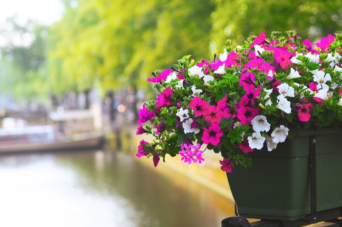 """""""The next time you think of beautiful things, don't forget to count yourself in."""" Bomdia Good Morning HaveANiceWeek Flower Freshness Fragility Growth Pink Color Beauty In Nature Close-up Focus On Foreground Nature Springtime Blossom In Bloom Petal Botany Day Flower Head Plant Tranquility Blooming Growing Scenics Taking Photos"""