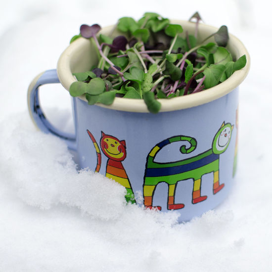 Sprouts Close-up Cold Temperature Day Enamel Mug Food Freshness Green Color Healthy Eating High Angle View Indoors  Leaf Microgreens Nature No People Snow Vegan Vegan Food White Color Winter