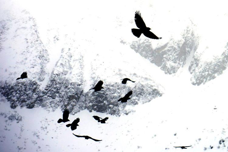 Birds flying over snow