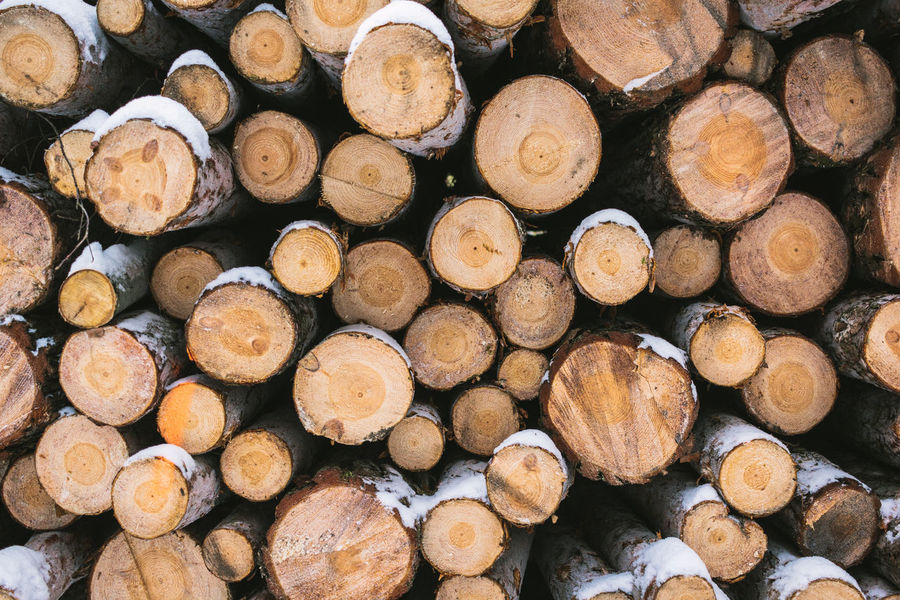 Piles of log/wood in forest Background Backgrounds Blurry Close-up Day Forest Landscape Logs Pile Low Angle View Moody No People Outdoors Pattern Pattern Background Pile Of Wood Wood
