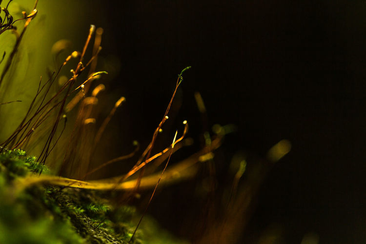 Beauty In Nature Close-up Freshness Grass Growth Nature Night No People Outdoors Plant Selective Focus