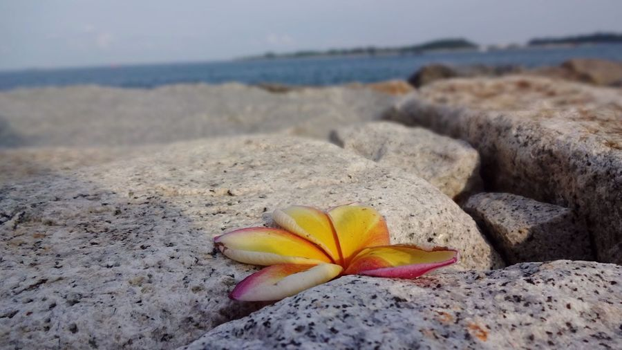 The Great Outdoors - 2017 EyeEm Awards Sea And Sky Sea Flower Flower Head Ocean Ocean View Seaside Seascape Rocks Stone Stones & Water Sea View Sky And Clouds Sea And Rocks Mix Yourself A Good Time Paint The Town Yellow