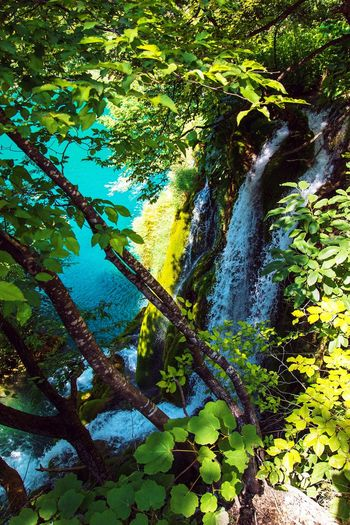 River Waterfall Rockriver Nature Travel Rock Tree Croatia Tranquility Lake Scenics Plitvice National Park Plitvice Plitvicelakes Plitvicelake Plitvickejezera Water Plitvickajezera Plitvice Lakes National Park Plitvicka Jezera Nacionalni Park Beauty In Nature Reserve Journey Tourism Landscape