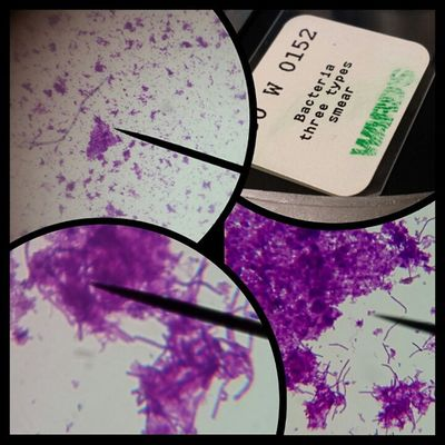 Microbiology Study Microscope Macro Investigation Lahc Micro Class School Beautiful Universe Life Fun Observation Eukaryote Prokaryote Cell Growth Culture Lab