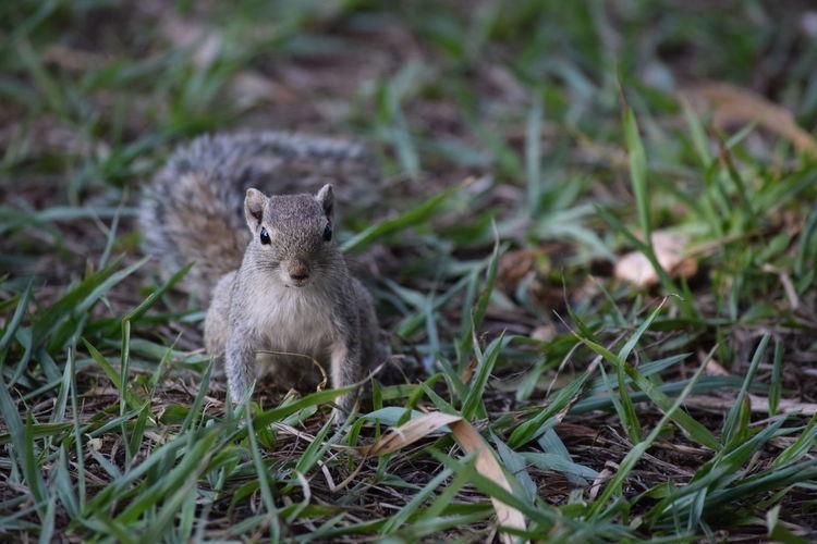 # squirrel Pet Nature Squirrel Closeup Lalbagh, Bangalore-India Bangalore Peace Of Mind