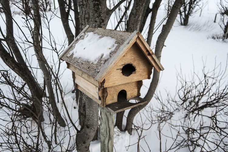 Low angle view of birdhouse on tree in winter