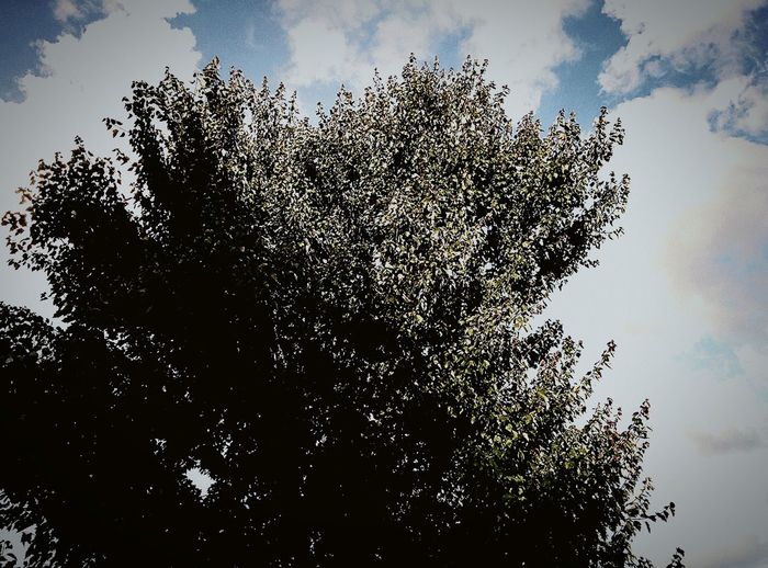 South Carolina Tree Colorful Sunlight Check This Out Sky Taking Photos Hanging Out