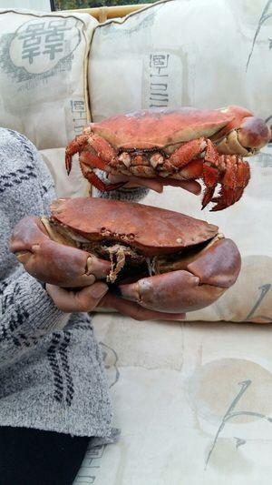 Crabs Crab SeafoodLover SEAFOOD🐡 Fresh