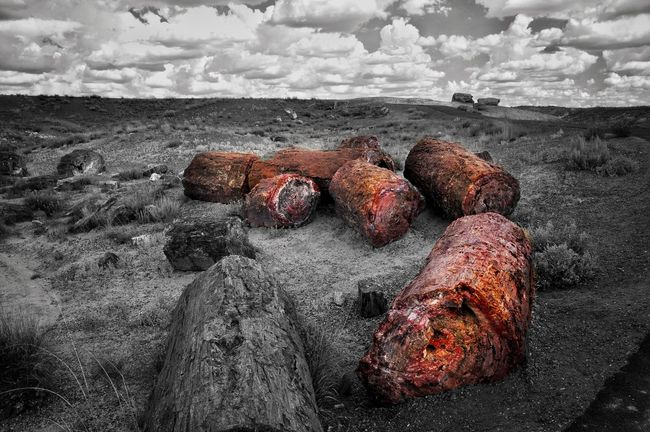 I must be in a Colorsplash edit mode right now ... as well as another Petrified Treegasmic Tuesday EyeEm Best Edits EyeEm Nature Lover Petrified Forest National Park